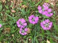 Ferienwohnungen Neuwiese - Blumen auf dem Grundstück